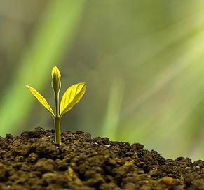 Spiritual Growth Copy.png