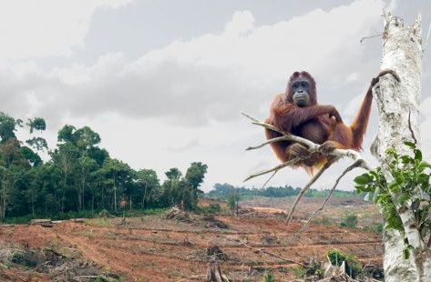The Problem With 'Sustainable' Palm Oil