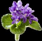 Violet Leaf.png