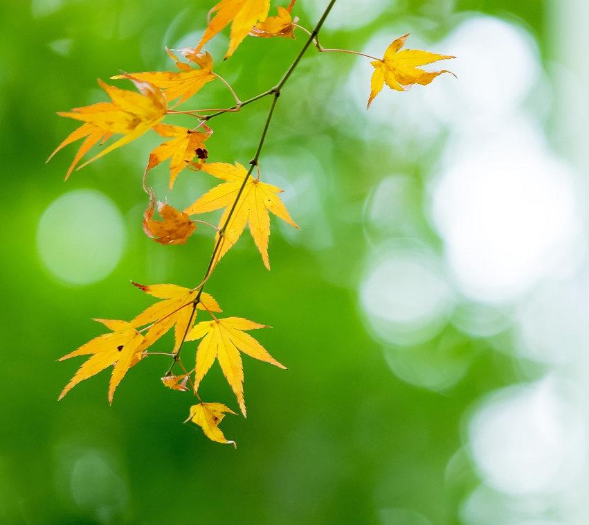 leaves-1601289017515-9351.jpg