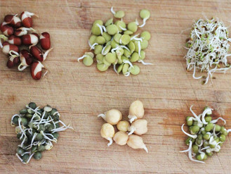 Sprouted Beans - Reinventing Food