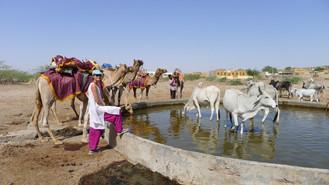 Day #19: Desert life