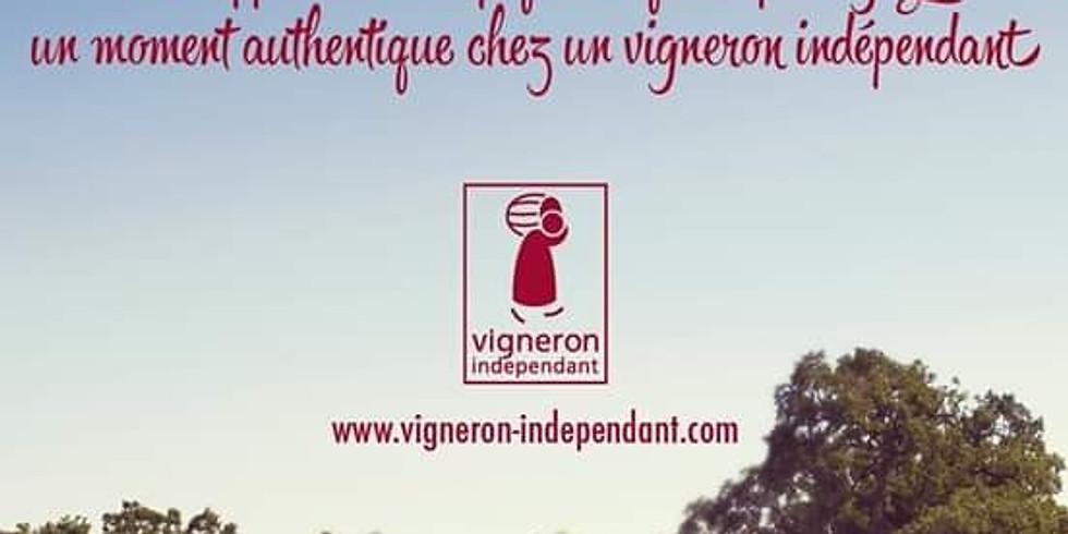 Pique Nique Vigneron - JONQUIERES