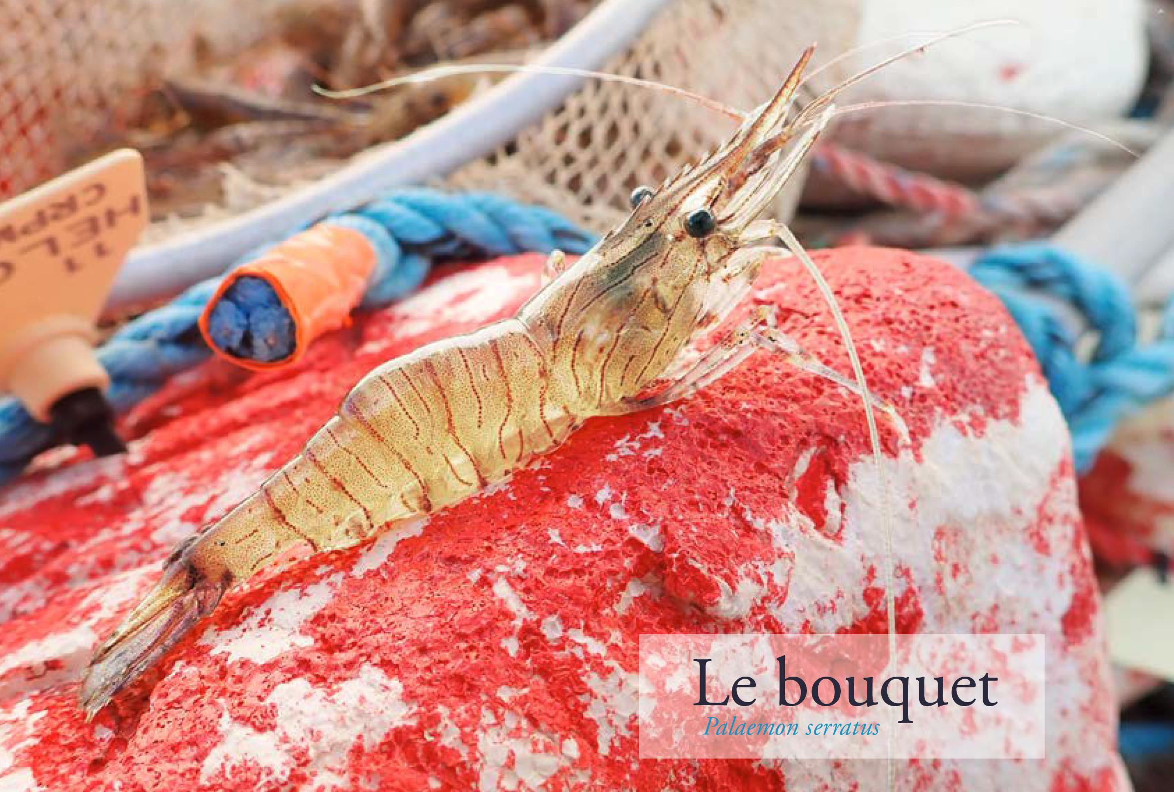 Programme Gédubouq
