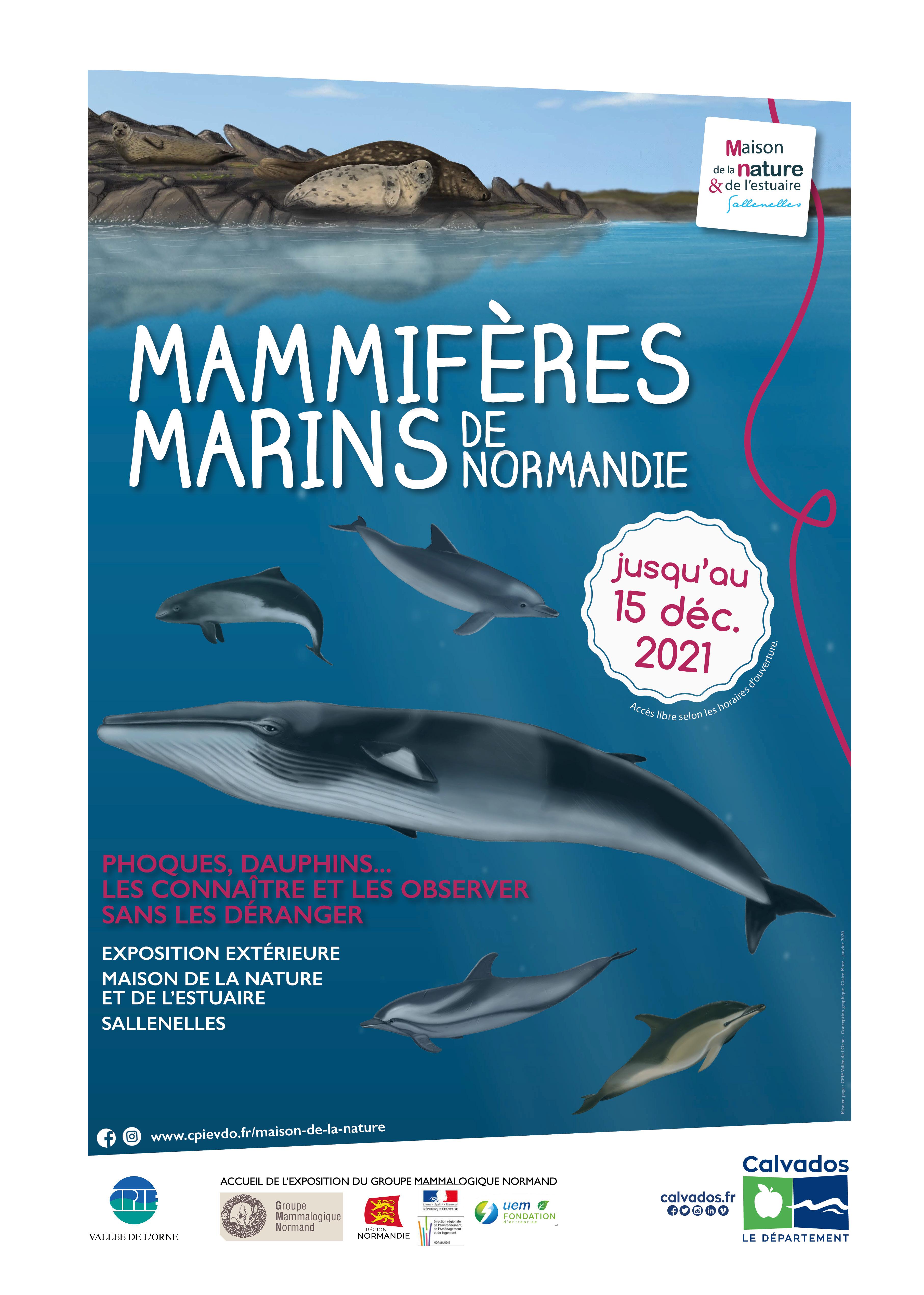 Mammifères marins de Normandie