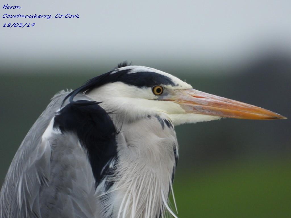 Heron 10