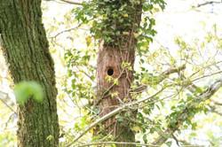 Tomnafinnoge Wood