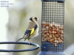 Goldfinch 6