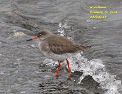 Redshank 2