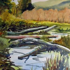 Swamp and Meadow.jpg