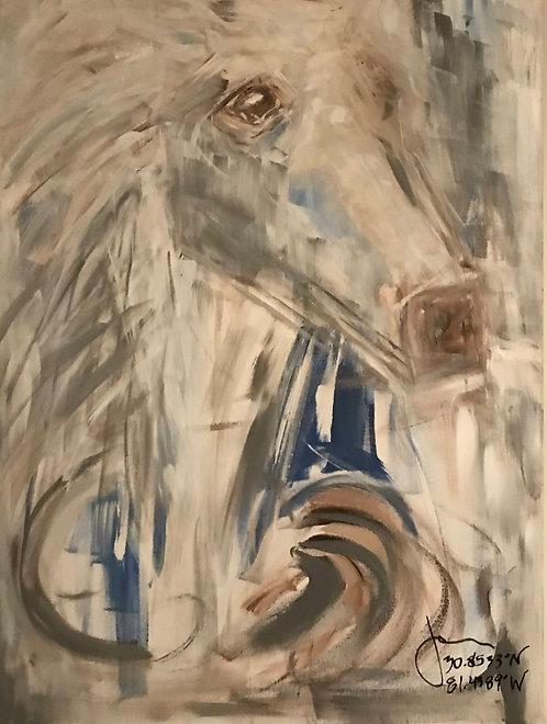 Cumberland Island Horse