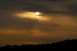 sunset-clouds-geese-1458768-h.jpg