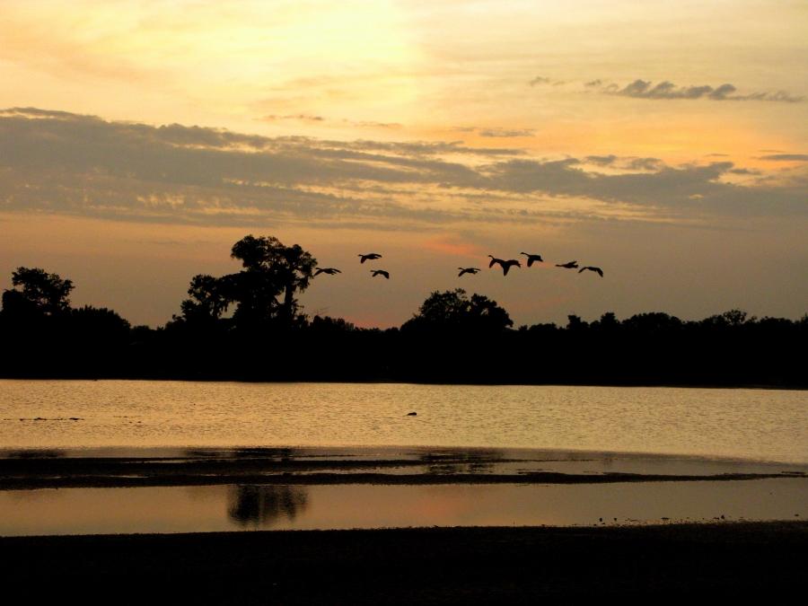 geese-land-soar-2670677-h.jpg