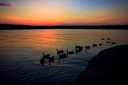 geese-goose-lake-17139431-o.jpg