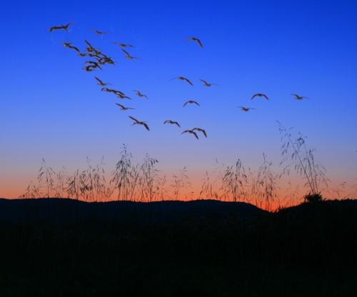 sunset-geese-flight-2067791-l.jpg
