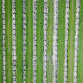Mesmorizing rows of vines