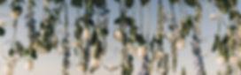 ashroff-1415.jpg