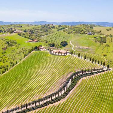 Vineyard Landscapes
