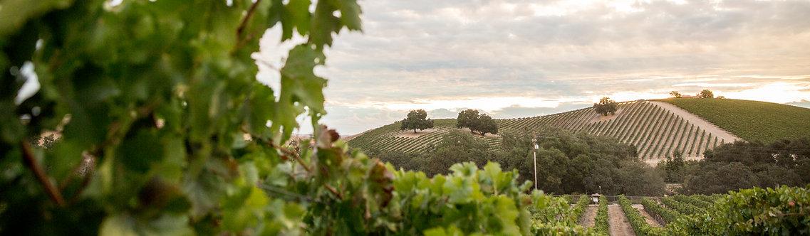 grapes031.jpg