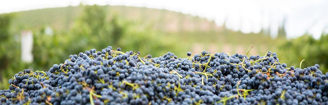 grapes009.jpg