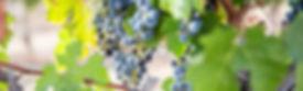 grapes013.jpg