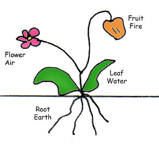 Parts of a Plant.jpg
