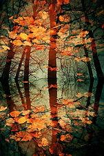 autumn-leaves-in-pool.jpg