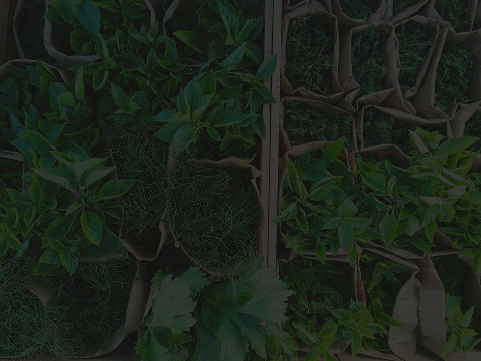 Green-garden-1_edited.jpg
