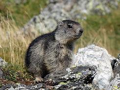 Marmotte col du Tourmalet - Laurent Cour