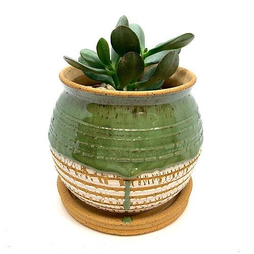 Premium Planter with Succulent