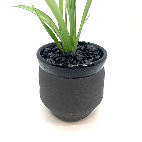 Planter with Spider Plant