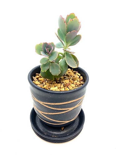 Planter with Succulent