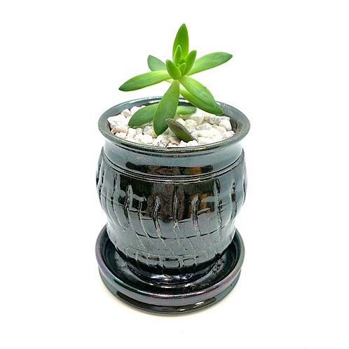 Small Planter with Succulent