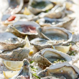 Oyster Flight