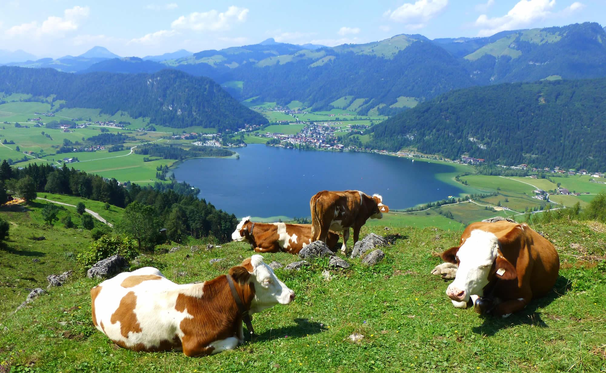Wandern im Tiroler Kaiserwinkl