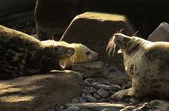 Hoy Seals