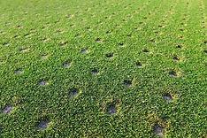 Turfgrass nutrition & Greens Grade Granular