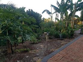 fruit garden 1.jpg