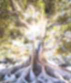 jeremy-bishop-556948-unsplash_edited.jpg