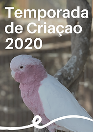 Temporada_de_Criaçao_2020_Ao_Vivo.PNG