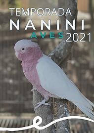 Temporada de Criaçao 2020 Ao Vivo-2.png