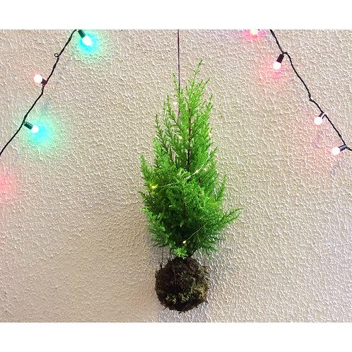 Kokedama de Pinheiro de Natal