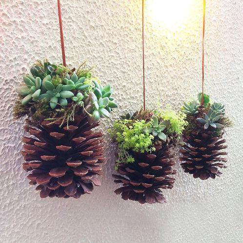 Pinhas Decorativas com Suculentas