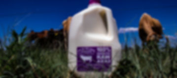 PPC Gallon Milk Jug 1.jpg