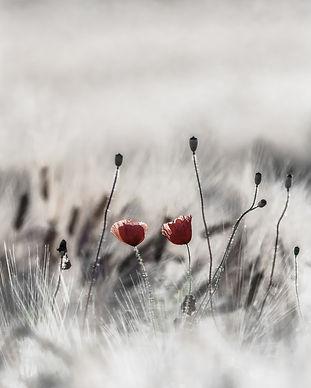 bloom-blooming-blossom-459037.jpg