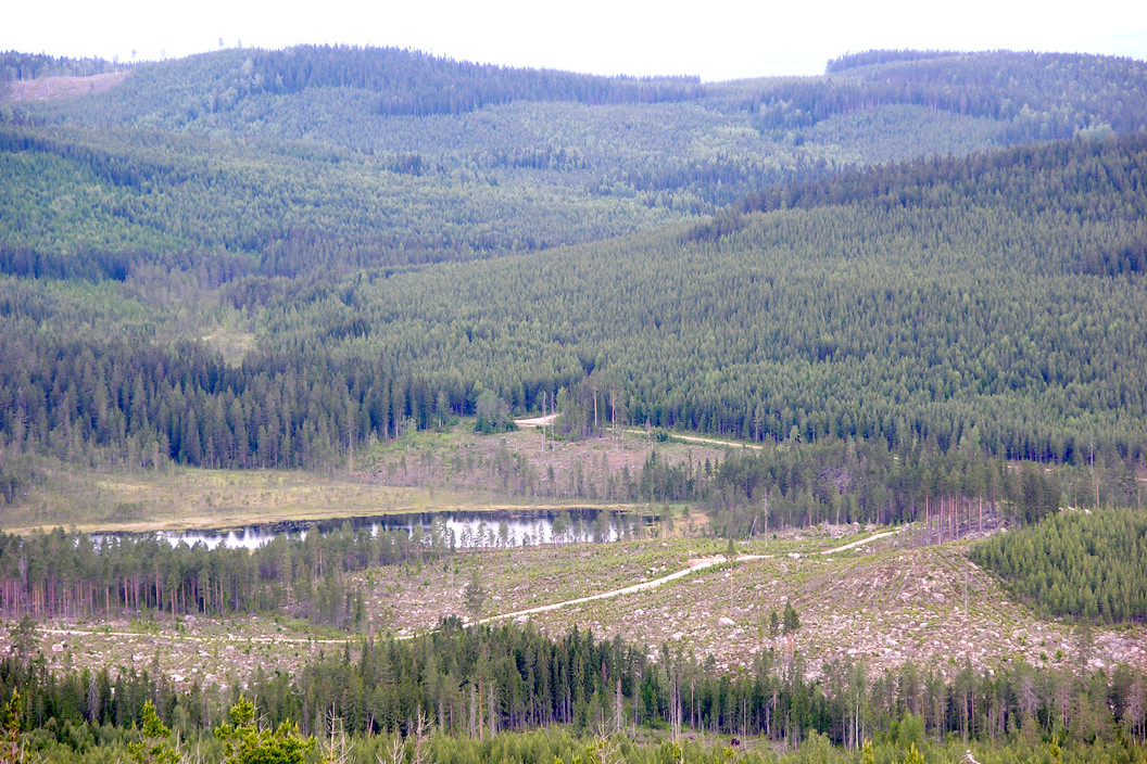 storskogsbruk_dalarna_Loftonberget_c.jpg