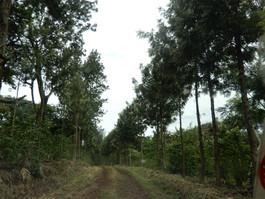 Gomma_coffee_plantation(Photo_Biruk Ayal