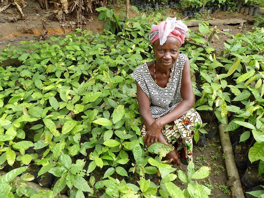 Gola cocoa, Sierra Leone. Chairperson Ni