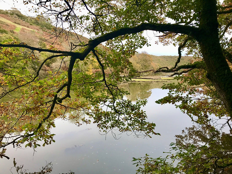 Looe River