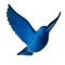 bluebird_solid__5_-removebg-preview.png